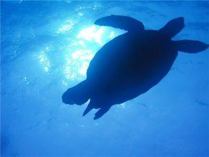 海の中の亀